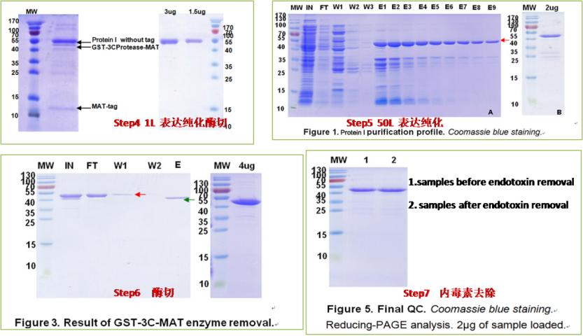 大肠杆菌蛋白表达案例2